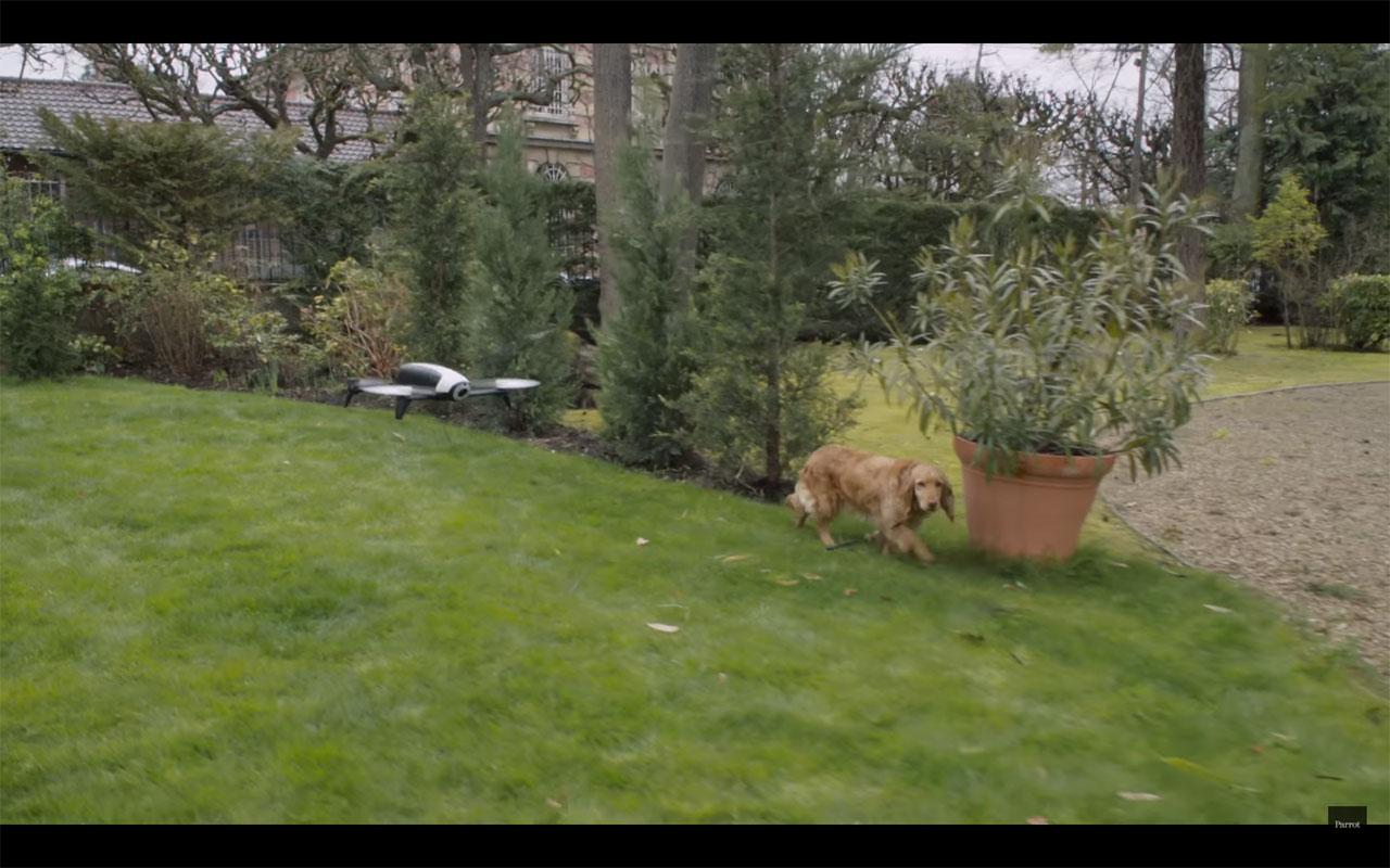 Parrot-Bebop-Dog-Walker