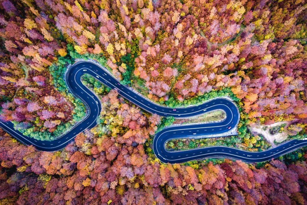 bogata-forest-romania-by-deepluero